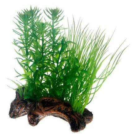 Flora Root 2 17cm