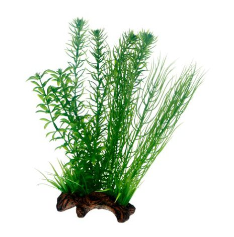 Flora Root 2 L 30cm