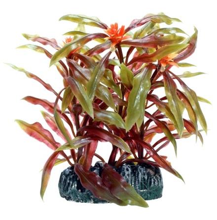 Nesaea Plastväxt 7cm