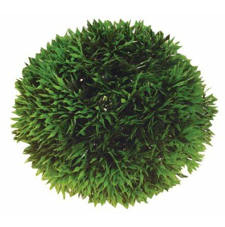 Plant Ball 9cm