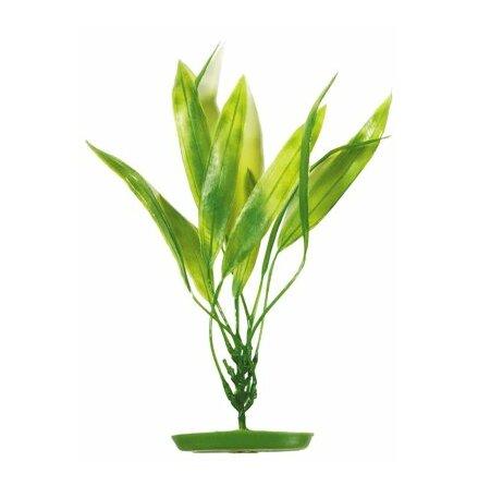 Svärdplanta 38cm