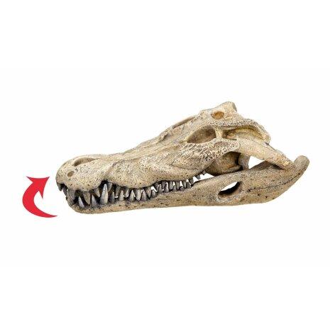 Krokodilskalle 225x115x75mm