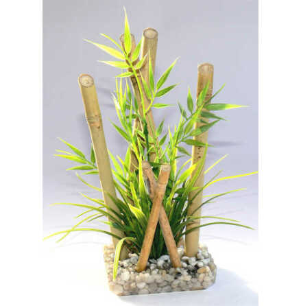 Bamboo large plants 26cm