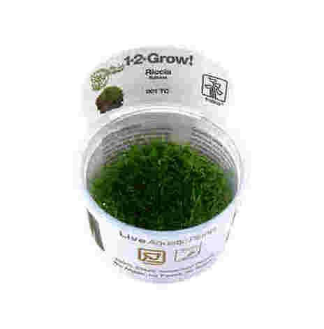 Riccia fluitans 1-2-Grow