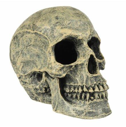 Skull/Dödskalle 16x10,5x13,2