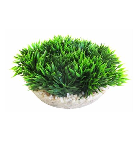Medaljformad grön mossa 12 cm i diameter