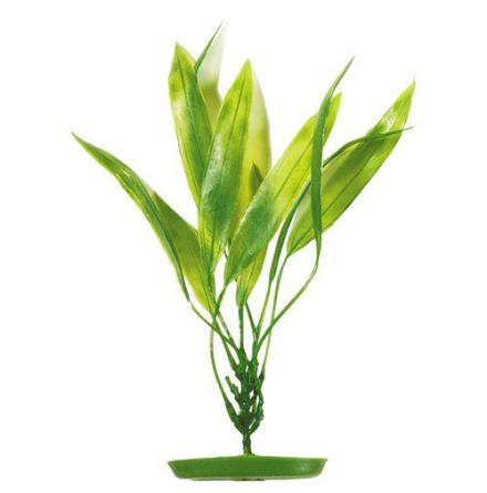 Amazon Svärdplanta 20 cm, Marina