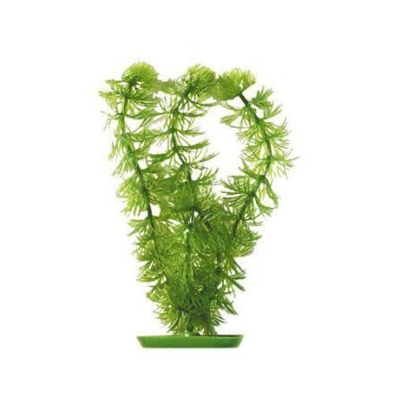 Hornwort, Ceratophyllum demersum 38 cm , Marina