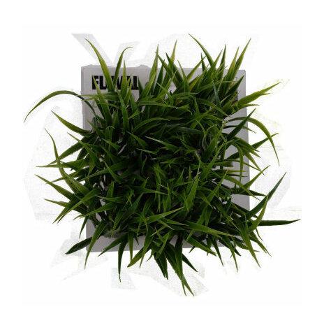 Plastväxt Chi gräs