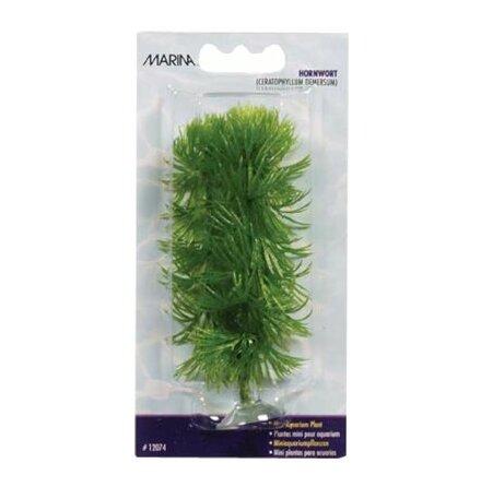 Hornwort mini 10cm