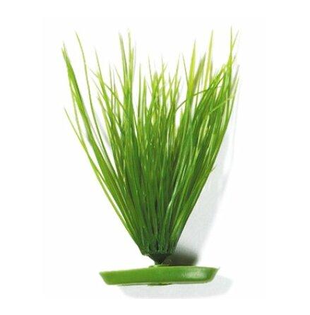 Hairgrass 20cm